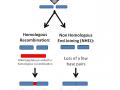 基因组工程简介