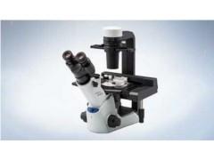 奥林巴斯倒置显微镜 CKX53