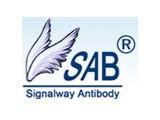 Signalway Antibody LLC (SAB)