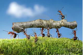 基因改造蚂蚁揭示社会性昆虫进化之谜