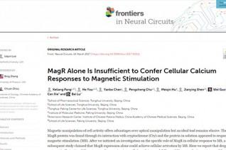 学术争端新进展:研究称MagR不能实现磁遗传