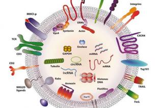 如何快速发现肿瘤特异性外泌体 RNA 分子标志物