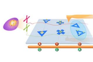 上海应物所等在 DNA 折纸纳米力学成像探针设计方面取得进展