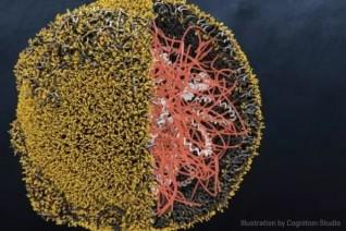 这绝对是未来基因转导的黑科技:纳米颗粒让CAR-T细胞直接在体内产生