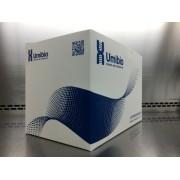 外泌体(Exosome) Western blot检测服务