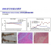 DSS诱导的肠炎模型