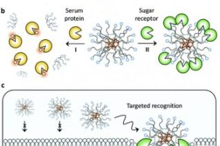 荧光糖球超分子靶向成像研究获进展