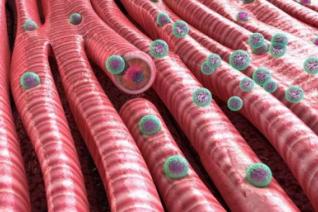 突破!Science子刊:纳米药物可治疗心脏疾病