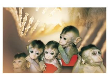 体细胞克隆疾病猕猴模型实现批量生产,将建立疾病模型非人灵长类平台