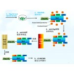 Label-free 非标定量蛋白质组学实验