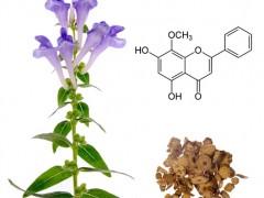 我国科学家利用全基因组测序阐明中药黄芩抗癌机制