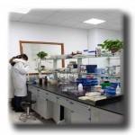 毕赤/酿酒酵母蛋白表达技术服务