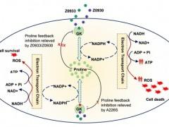 研究发现增强谷氨酸激酶活性可杀死结核菌