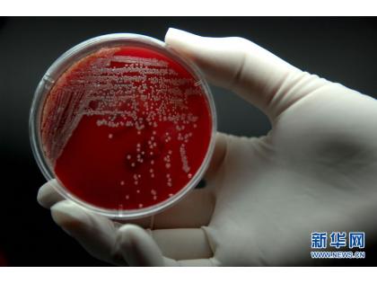一种耐药性超级细菌正在欧洲的医院传播