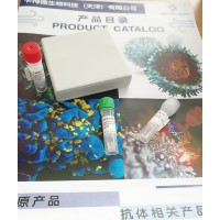 重组新冠NTD蛋白单克隆抗体